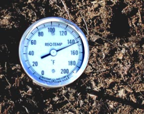 thermometer in compost windrow reads 145°