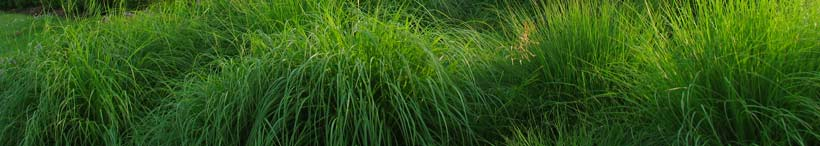 bright green grasses